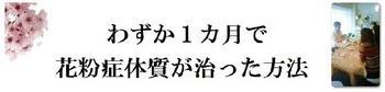 花粉1.JPG
